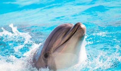 Dolphin Show Tours in Sharm