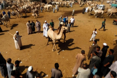 Birqash Camel Market Tours in Cairo