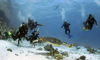 Intro Diving in Sharm El Sheikh Tours