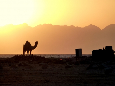 Ras Abu Galum Safari in Sharm Tours