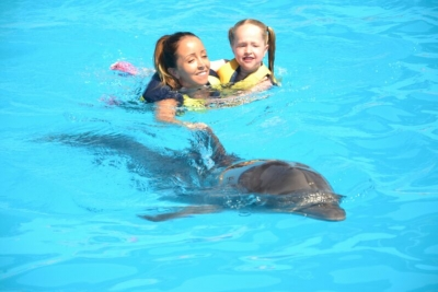 Swim with the dolphins in Sharm El Sheikh