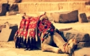 Cairo and Alexandria Tours Package