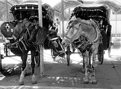 Luxor Horse Carriage Ride Tours